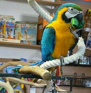 Macaw parrots for adoption now with Cages