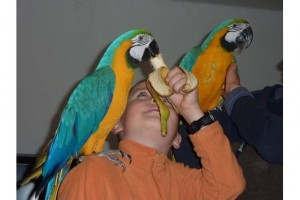 Macaw Parrots for adoption $470.00